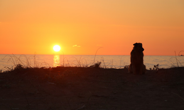Der Sonne entgegen…